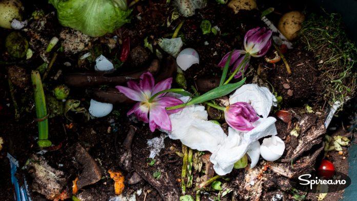 Alle typer matavfall og for eksempel en avblomstret tulipanbukett kan gå i komposten.