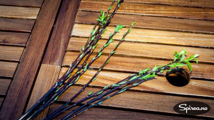 Nyskuddene fra i fjor kan klippes av og bli til nye planter.