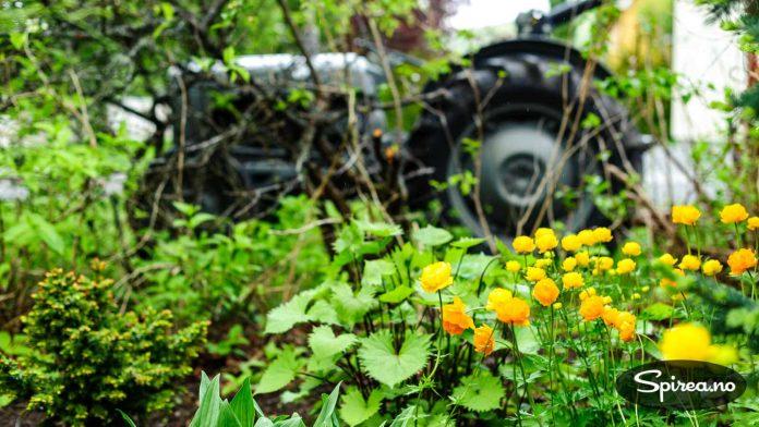 Ballblom og gråtass: Den gamle traktoren hører også med i hagen, bak staudebedet.