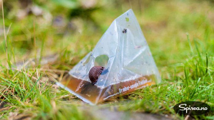 En sneglefelle som drukner sneglene i øl er en løsning vi har prøvd.