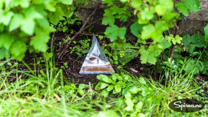 Plasser sneglefeller rundt omkring i hagen, i nærheten av der det pleier å være mye snegler.