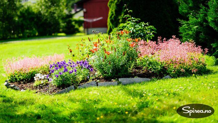 Storkenebb og liljer i en dekorativ, blomstrende sammenplantning.