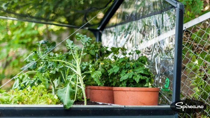 Inne i en GrowCamp er plantene beskyttet mot flygende og krypende skadedyr.
