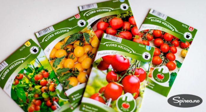 Velg helst små tomatsorter, da er det best sjanse for at de skal rekke å modne.