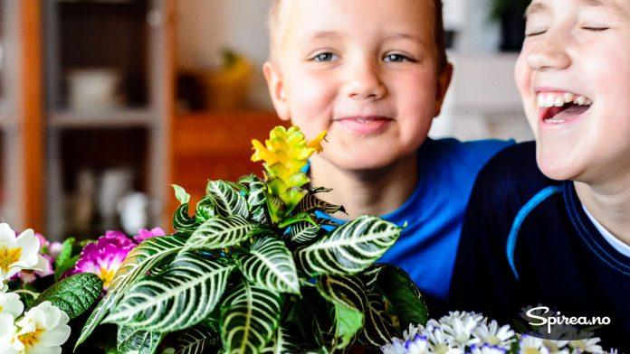 Sebraplanten er morsom, synes gutta.