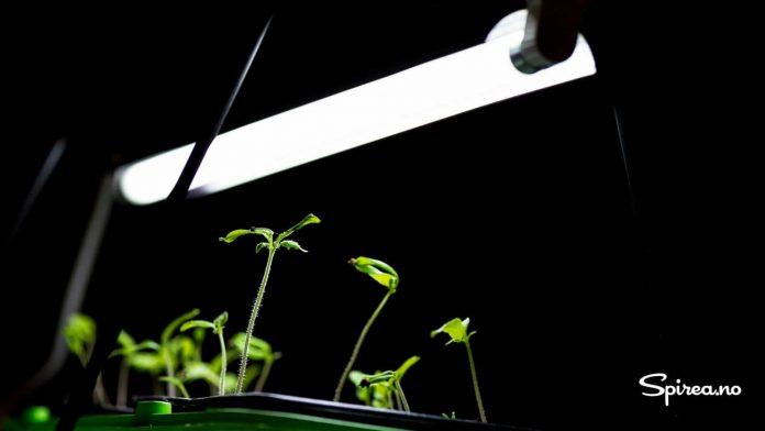 Lysrøret gir et behagelig lys som er spesielt bra for plantene.