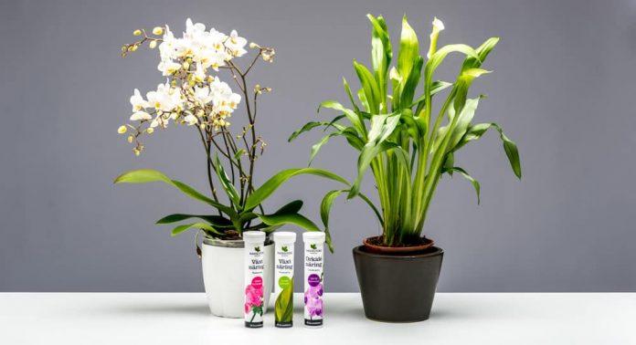 Du får kjøpt vekstnæring for blomstrende planter, grønne planter og orkideer.