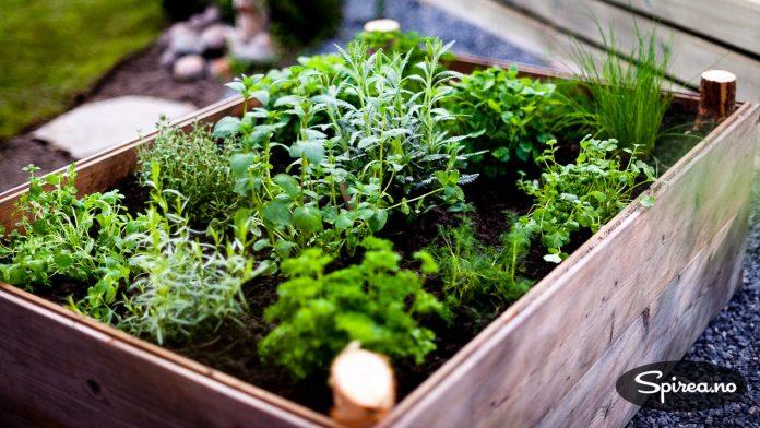 En kasse med forskjellige urter er praktisk å ha.