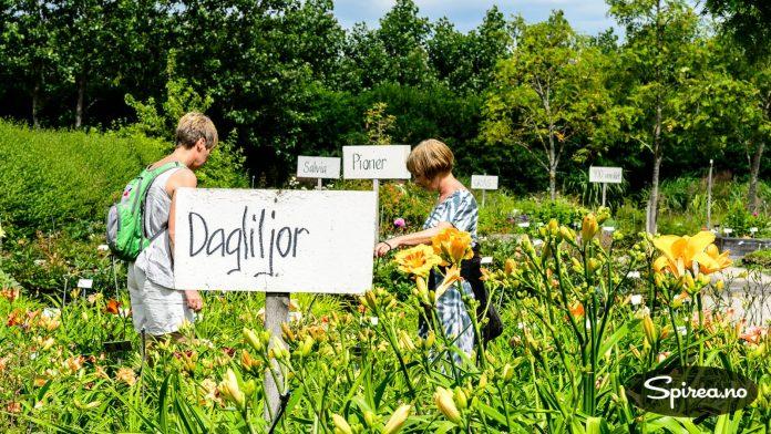 Håndskrevne skilt viser veien til plantene.