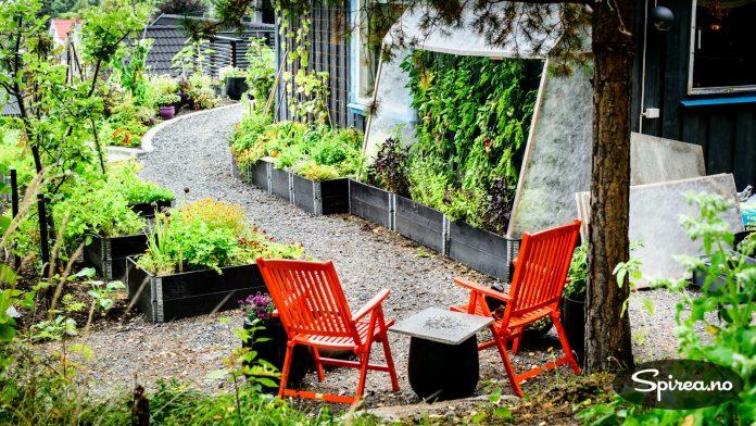 Hvis du ikke har plass til et ordentlig drivhus til tomatplantene, kan du lage ditt eget med fiberduk, slik Anne på Moseplassen har gjort.