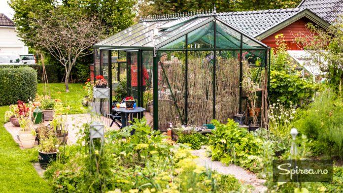 Utenfor drivhuset har Bjarne en imponerende kjøkkenhage.