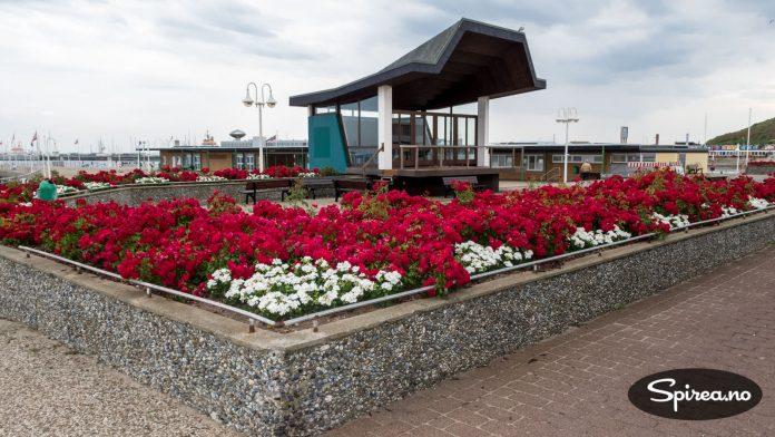 Flotte beplantninger ved havneområdet.