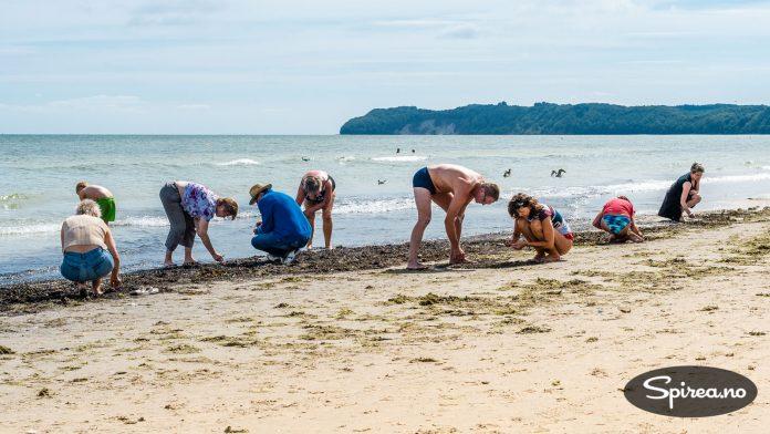Tyskerne liker å lete etter rav, eller bernstein som de kaller de forsteinede kvae-klumpene som skylles opp på stranda ved høyvann.