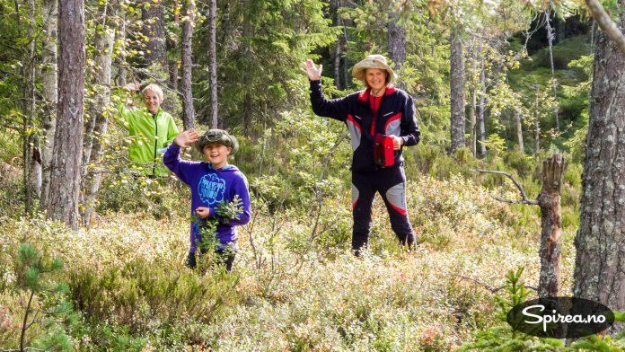 Litt utpå høsten kan turorienteringen med fordel kombineres med bærplukking.