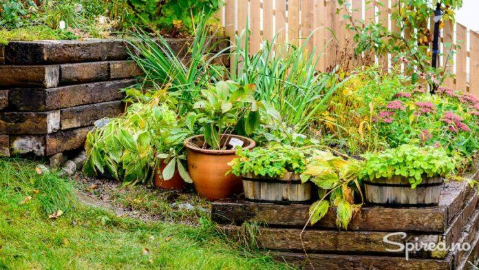Ved å sette alle plantene sammen, håper vi at de blir dekket av snø og vil klare seg gjennom vinteren.