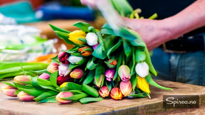 Snitt stilkene før du setter buketten i vasen, og fyll på vann hver dag.
