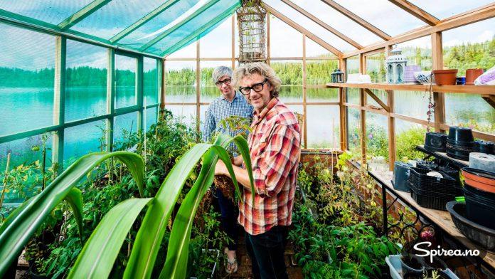 I det engelske sedertredrivhuset fra Gabriel Ash vokser Valdres-tomater.