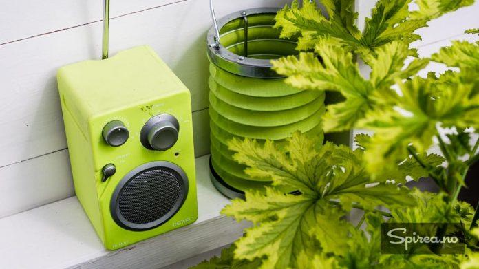 Mariann har sansen for detaljer, som denne radioen som matcher plantene.
