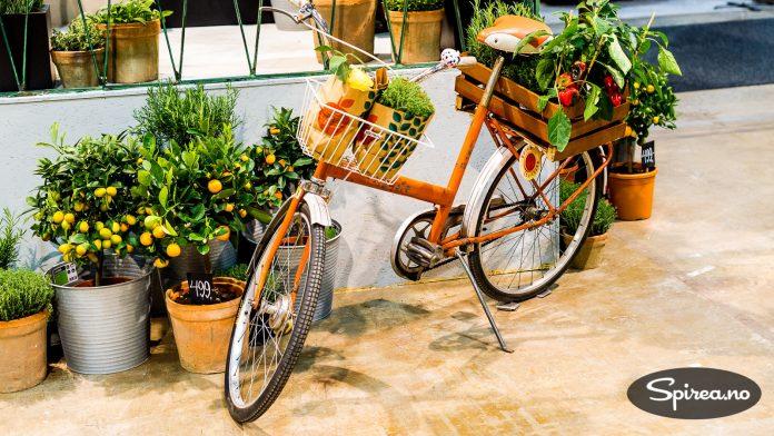 En gammel DBS kombisykkel gjorde nytten som plantestativ på Plantasjens stand.