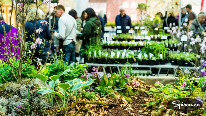 Garden Living har laget et flott miljø med skogshage.