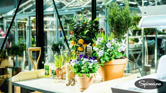 Flott miljø og gode ideer til drivhusmiljø.
