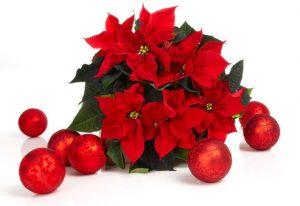 julestjerne_680