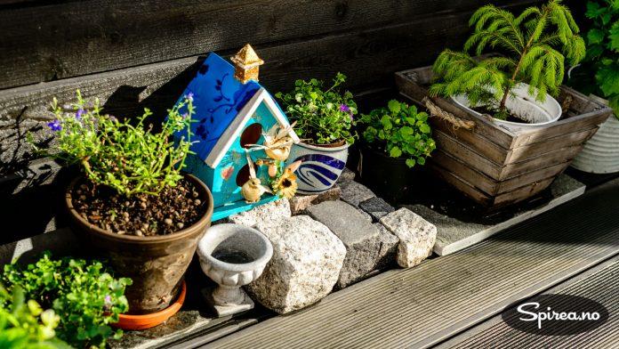 """Et lite hjørne på terrassen har Trond fått bruke til planter og krukker som egentlig ikke """"passer"""" helt."""