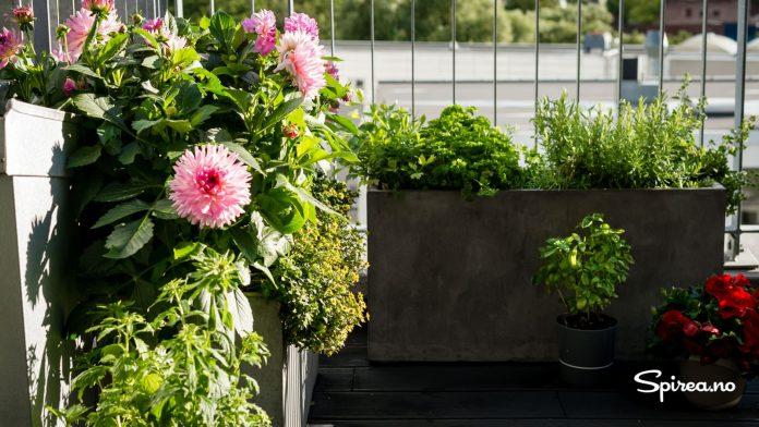 De store betongkassene fra Indoor Outdoor har plass til mye jord og gjør at planter kan overvintre på takterrassen.