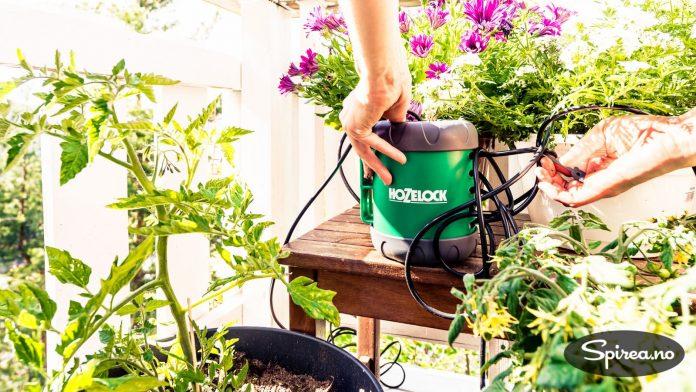 Bruker du automatisk vanningsanlegg for krukker, slipper du å komme hjem til uttørkede planter. Vi bruker et system som heter Aquapod Auto fra Hozelock.