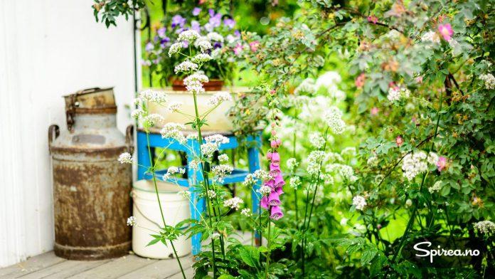 """I Trines hage er det plass til et vell av blomster, og """"ting med sjel"""" som hun for det meste har funnet på loppemarked."""