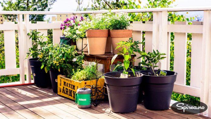Med et krukkevanningssystem med dryppvanning slipper du å få noen til å vanne i ferien, og kan komme hjem til frodige planter.