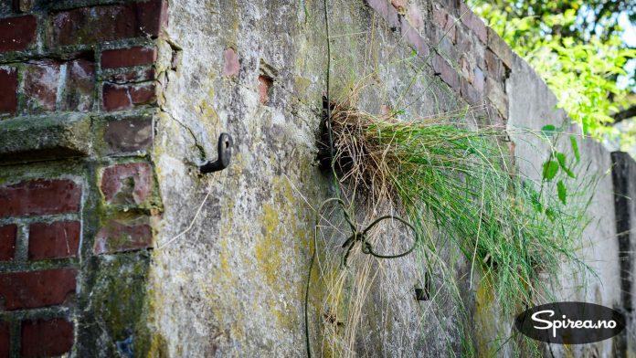 Tidligere vokste det gress ut av hullene i muren.