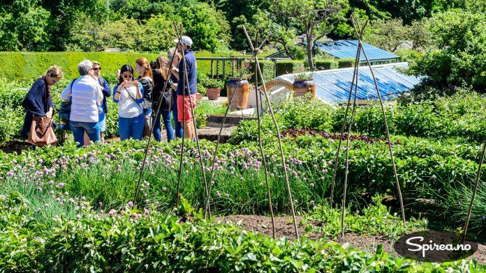 De kongelige eierne var opptatt av at hagen skulle være til nytte, ikke bare til pryd. Kjøkkenhagen utgjør derfor en betydelig del av parkområdet.