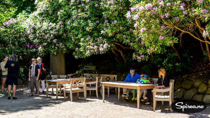 For de flest nordmenn er rhododendron en relativt liten busk. Her snakker vi om store TRÆR som skaper skyggefulle områder...