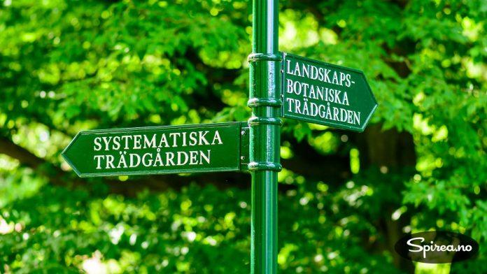 I den botaniske hagen finnes både ville vekster og kulturplanter.
