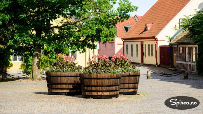 Ystad kommune prioriterer offentlig beplantning høyt, noe både fastboende og turister setter pris på.