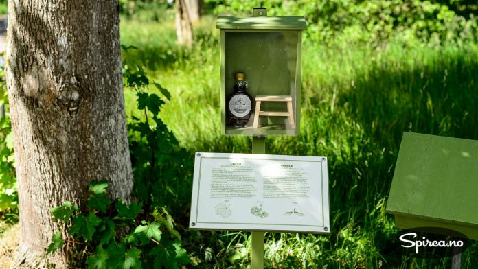 Ved siden av hvert treslag er det laget en liten utstilling om hva treet blir brukt til.