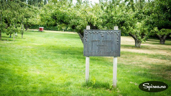 Disse epletrærne ble plantet av Henric Åkesson for godt over 100 år siden.