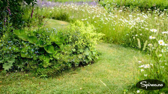 I hagen er det også funnet plass til flere ulike blomsterenger.