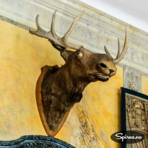 Det er mulig denne elgen ble utstoppet for 150 år siden, men i dag fremstår dette som et eksempel på litt pussig taksidermi.