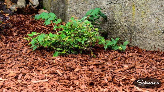 Dekorflis er spesielt godt egnet i bed med busker som skal bli store og derfor trenger godt med jord rundt røttene.