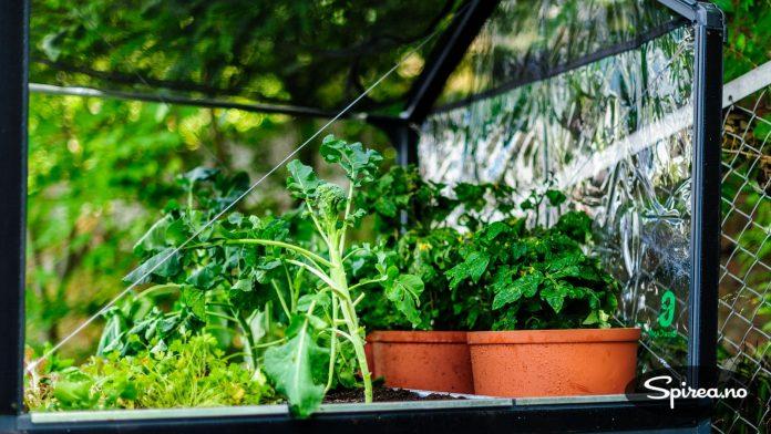 Bruker du jordbakker kan du dyrke alle slags grønnsaker som vokser over jorda. Du kan også sette pottene rett i dem.