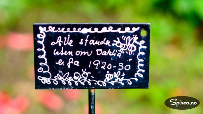 Alle staudene i hagen er fra 1920-1930.