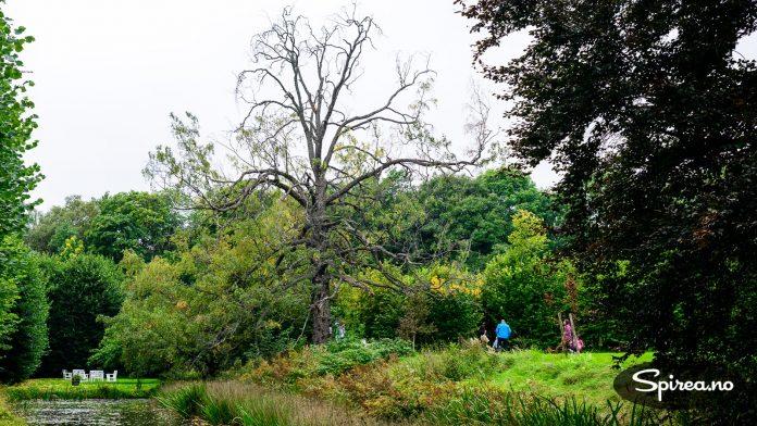 Hengebjørken på bildet ble plantet i 1827, og er trolig en av Norges eldste bjørketre. Bjørk blir vanligvis ikke eldre enn cirka 110 år. Bjørka heter Dåpsbirken, fordi den ble plantet på dåpsdagen til Haaken Christian Mathiesen.