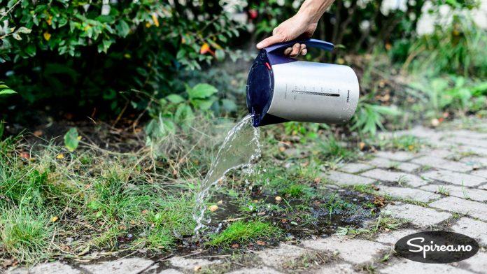 Hvis du heller på kokende vann, drepes røttene, og det tar lengre tid før ugresset vokser opp igjen.