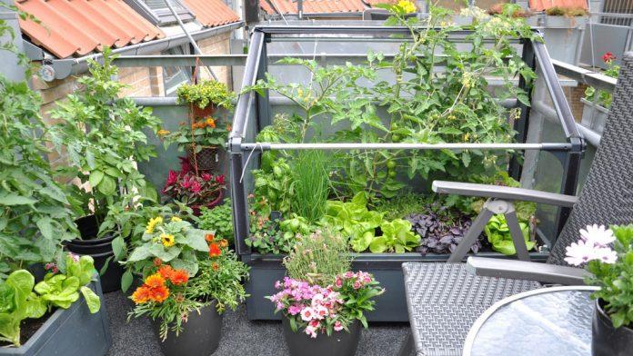 Du kan fint sette GrowCamp på terrassen.