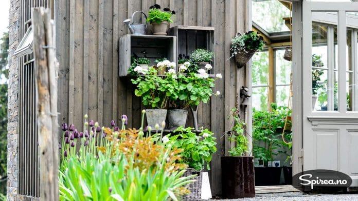 Lises favorittfarger er svart og hvitt, og blomstene holdes stort sett i den stilen.